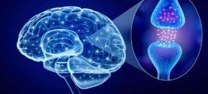 Gehirn neuronale Netze